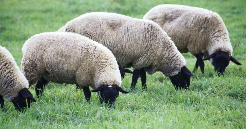 撸羊毛是什么?怎么撸羊毛又快又多?