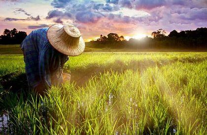 一号文件昭示互联网金融需规范开展涉农业务