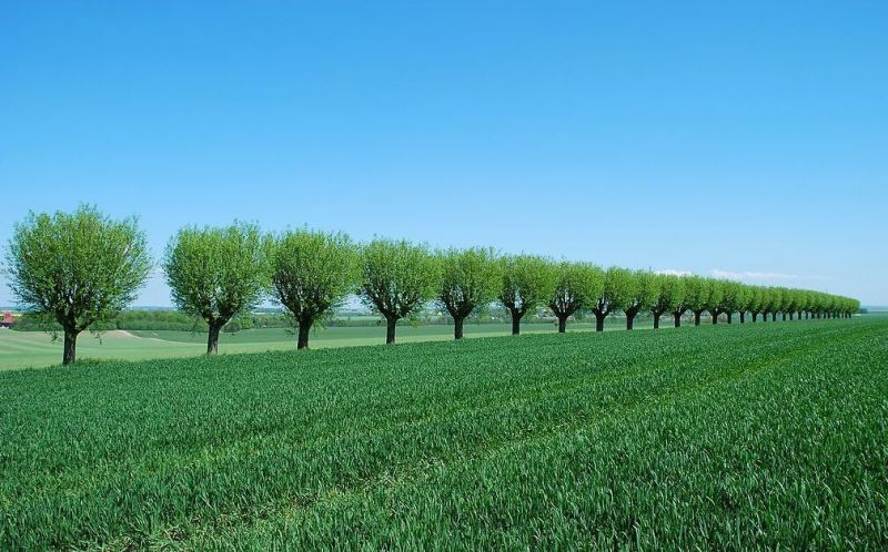 十大角度看众筹如何演绎互联网+跨境农业? - 金评媒