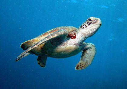 海龟交易系统怎么在外汇市场运用?具体规则详细解读