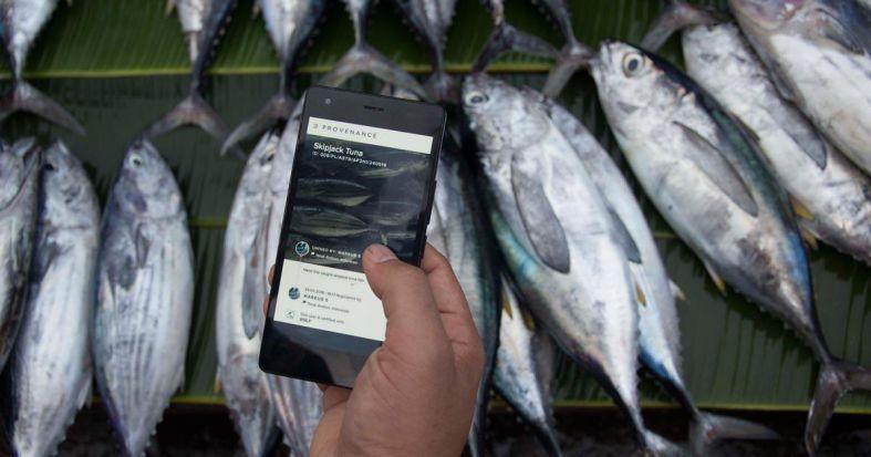 世界自然基金会使用区块链纠正金枪鱼业乱象 - 金评媒