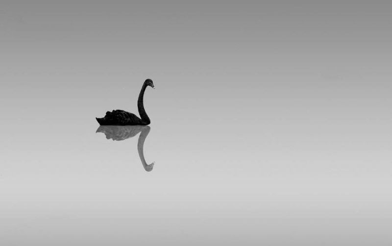 稳不住的黑天鹅:A股至暗时刻与资金的敦刻尔克 - 金评媒