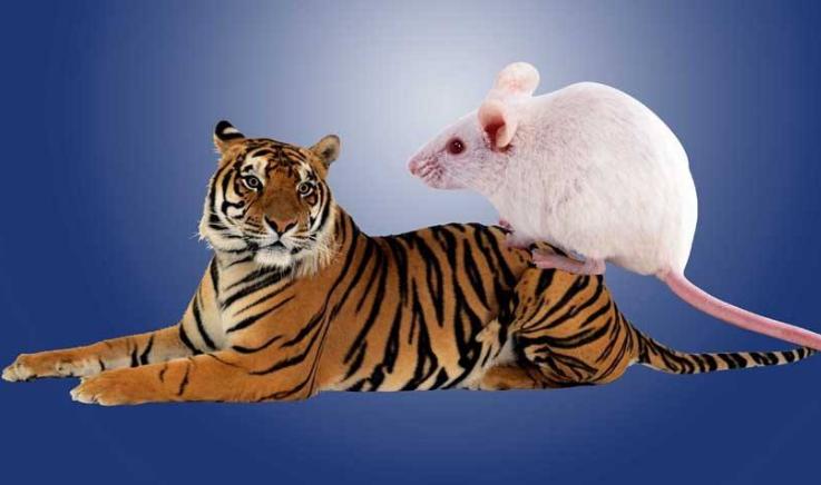 人民政协报谈防控系统性金融风险:宏观防虎,微观防鼠 - 金评媒