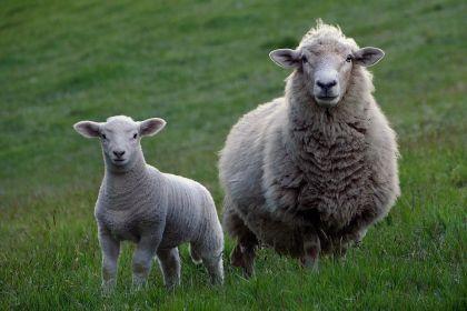 羊毛满天飞!理财女神告诉你 不该碰的就别碰