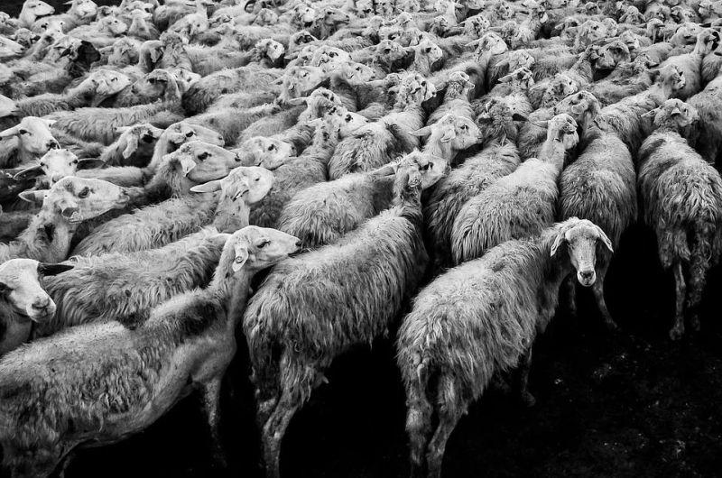 160万人薅羊毛 大数据风控治不了他们? - 金评媒