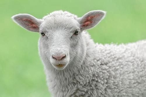 薅不到羊毛,你还会用微信还款吗? - 金评媒